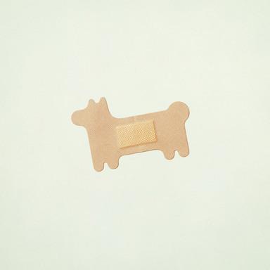 Dog Band-Aid