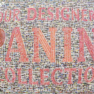 Dedication Paninis