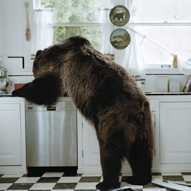 Bear in Kitchen