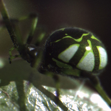Nike Spider