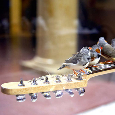 """Electronic Guitar Birds"""