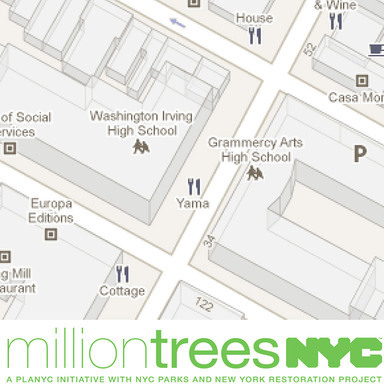 NewYorkersTrees