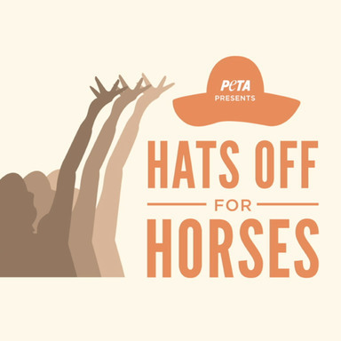 Hats Off For Horses