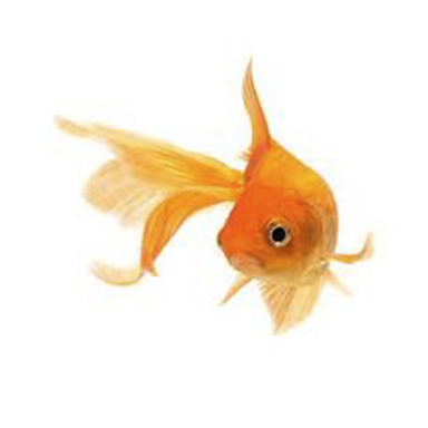 ADOPT A FISH