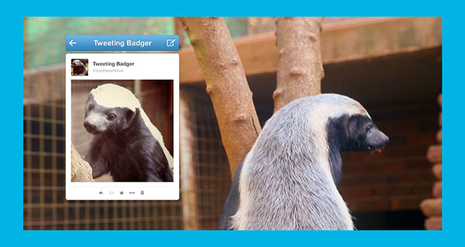 The World's First LIVE Tweeting Honey Badger