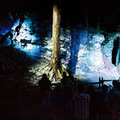 The enchanted woods of Foresta Lumina