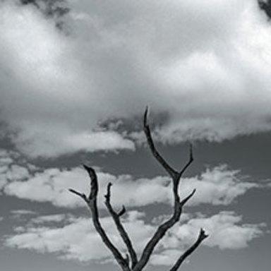 Trees & Rain