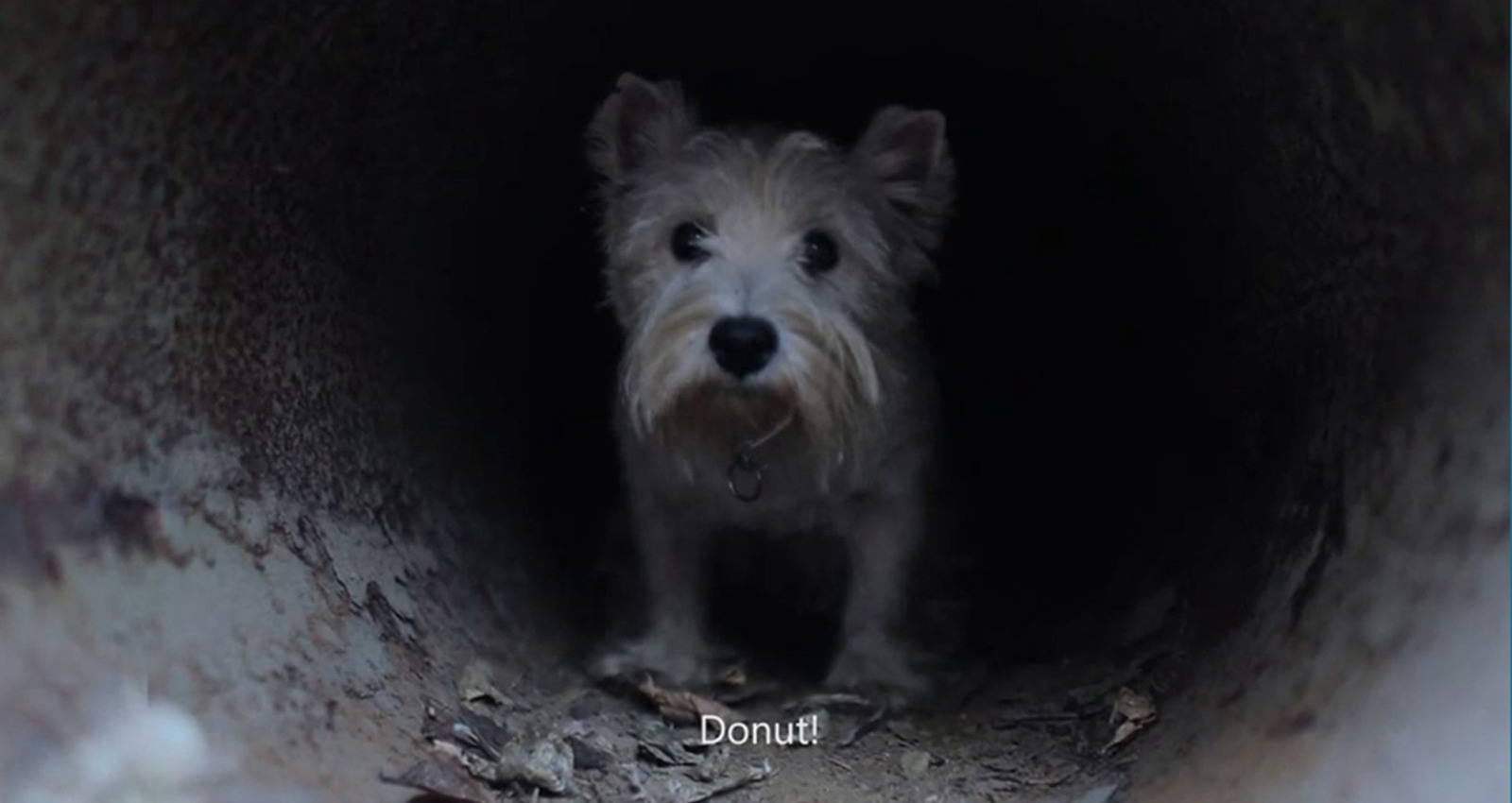 Finding Donut