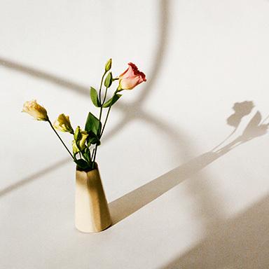 Shadows / Flowers