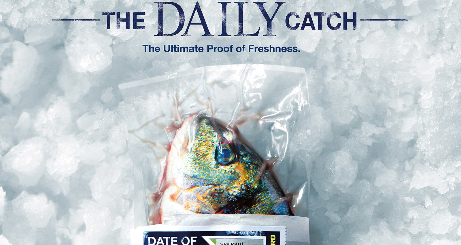 The Daily Catch