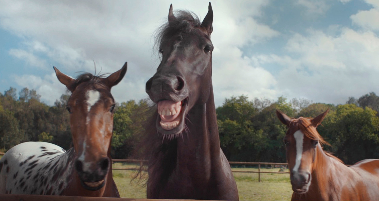 Laughing Horses