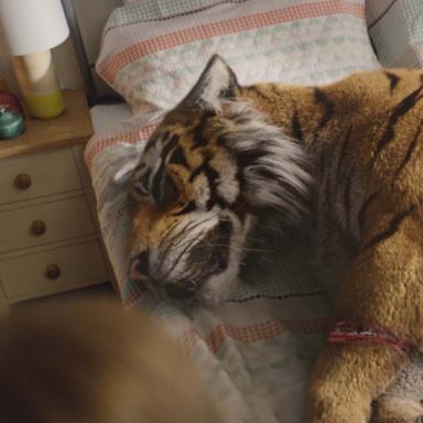 Tiger In Suburbia