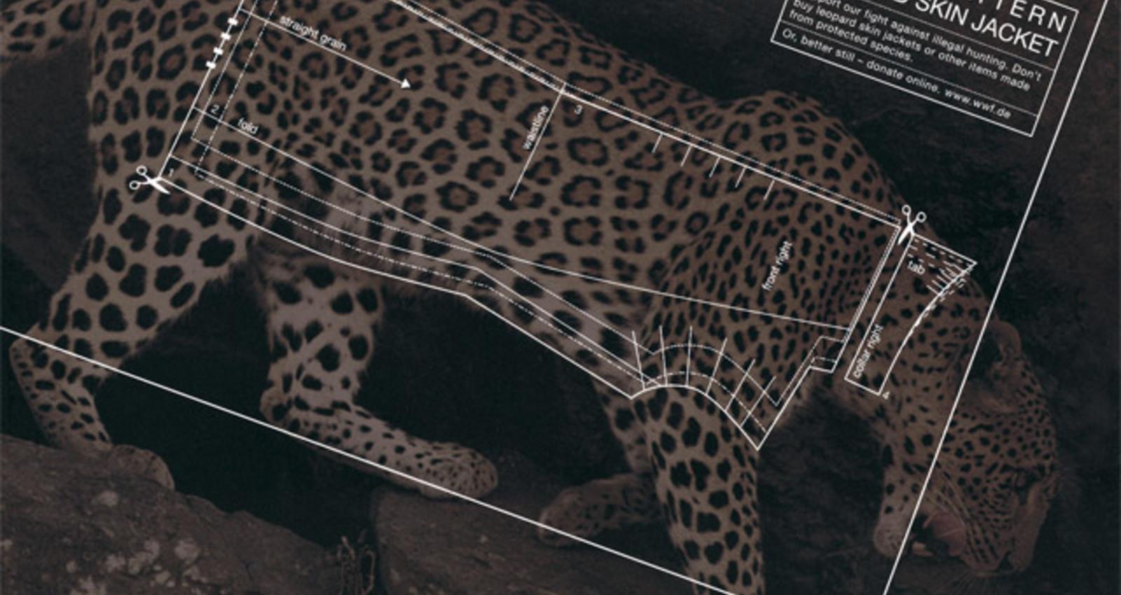 Leopard, Crocodile, Seal