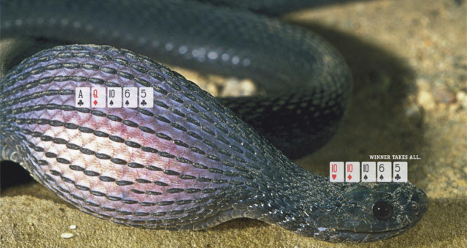 Hunter-Snake-Tornado