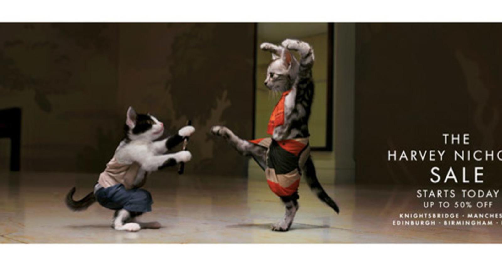 Karate Catfight