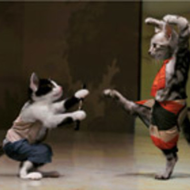 Karate Catfight