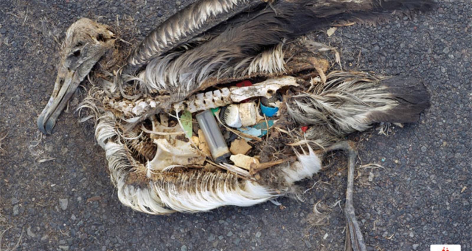Trash Seabirds