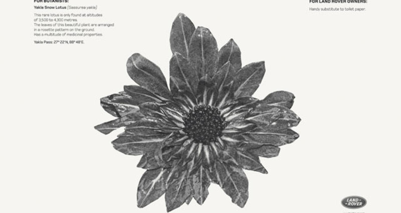 Yakla Snow Lotus