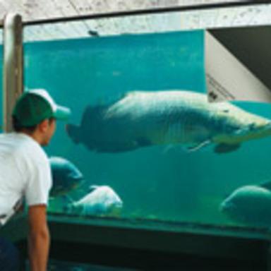 Paper Fish Tank