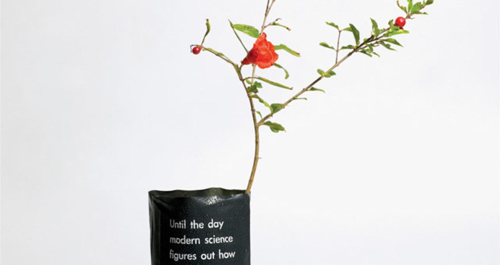 Please Plant Trees